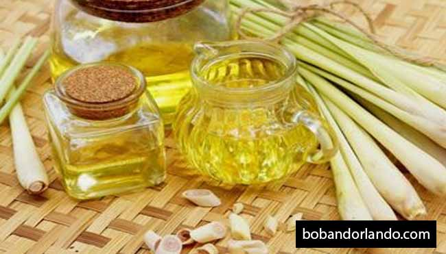Some of the Benefits of Lemongrass Oil for Babies
