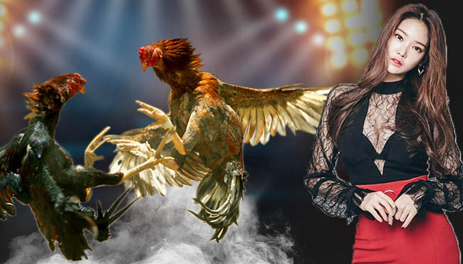 Know the Characteristics of Bangkok Chicken as a Champion